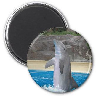 Imán del delfín del baile