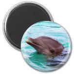 Imán del diseño del delfín