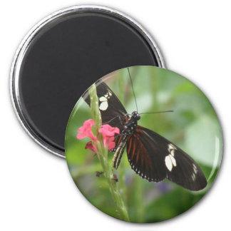 Imán del efecto mariposa