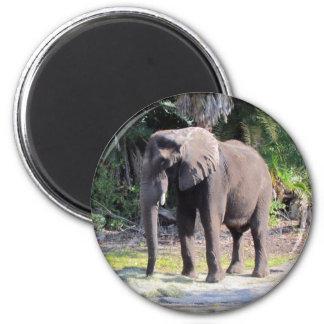 Imán del elefante