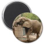 Imán del elefante africano