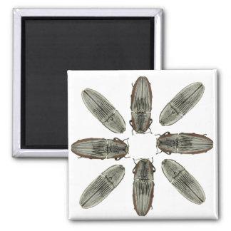 Imán del escarabajo de tecleo