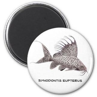 Imán del eupterus de Synodontis