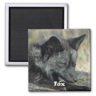Imán del Fox