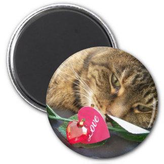 Imán del gatito del amor