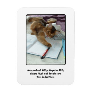 Imán del gatito del contable