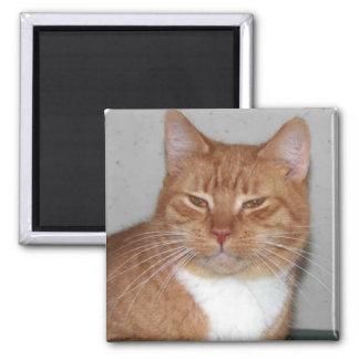 Imán del gato de Puddy