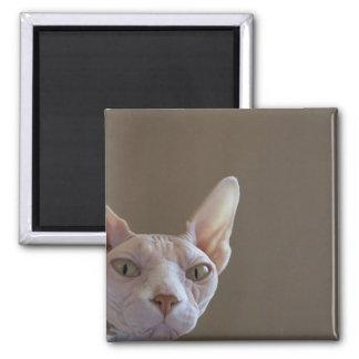 Imán del gato de Sphynx