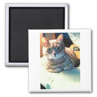 Imán del gato de Stella