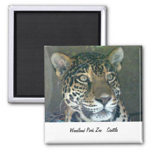 Imán del gato del parque zoológico del parque del