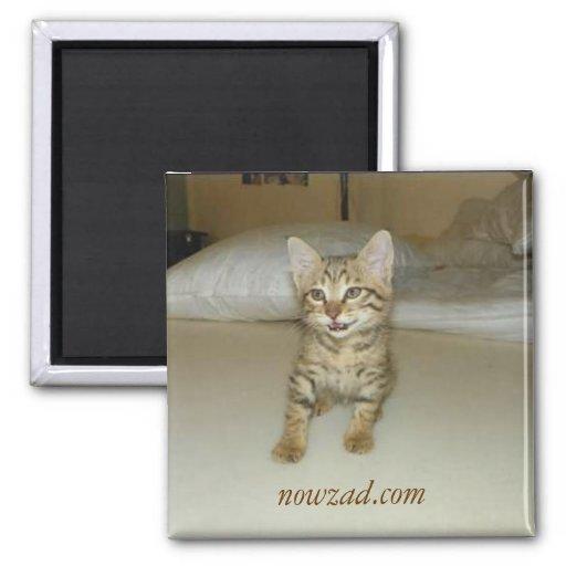 Imán del gato del rescate de Nowzad