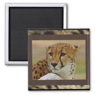 Imán del guepardo