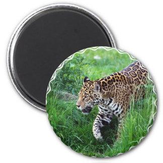 Imán del hábitat de Jaguar