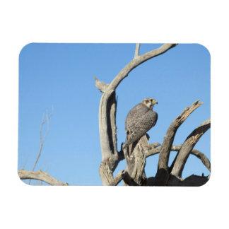 Imán del halcón de HawkPrairie de la pradera