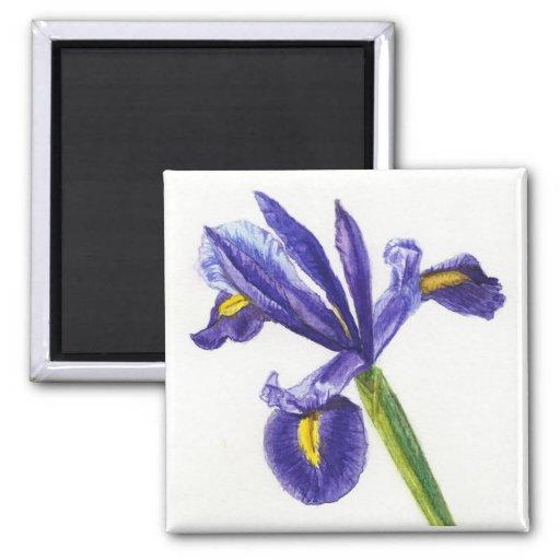 Imán del iris