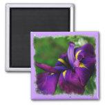 Imán del iris japonés
