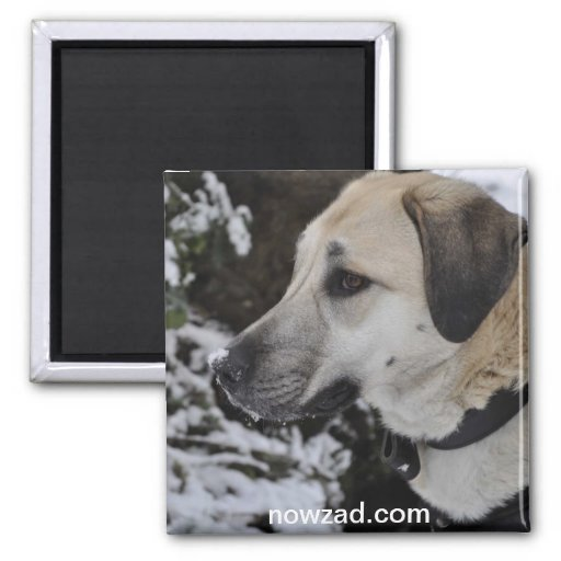 Imán del kilo del perro del rescate de Nowzad