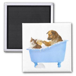 Imán del lavado del gato
