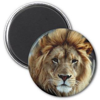 Imán del león