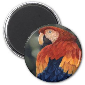 Imán del Macaw