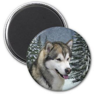 Imán del Malamute de Alaska