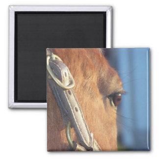 Imán del ojo del caballo