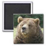 Imán del oso de Brown