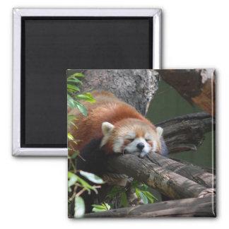 Imán del oso de panda el dormir