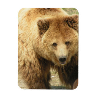 Imán del oso grizzly