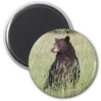 Imán del oso negro