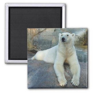 Imán del oso polar