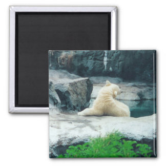 imán del oso polar 2 del bebé