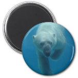 Imán del oso polar que nada