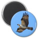 Imán del pájaro de Osprey