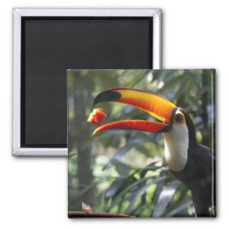 Imán del pájaro de Toco Toucan