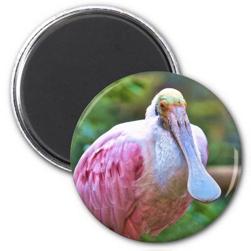 Imán del pájaro del Spoonbill rosado