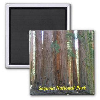 Imán del parque nacional de secoya