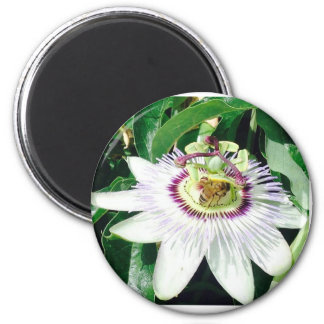 Imán del Passionflower