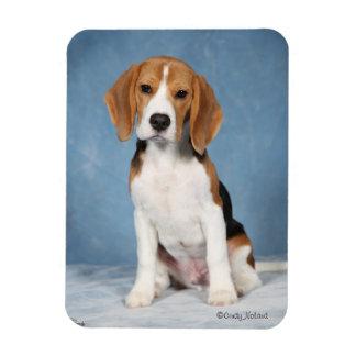Imán del perrito del beagle