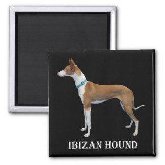 Imán del perro de Ibizan