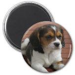 Imán del perro de perrito del beagle