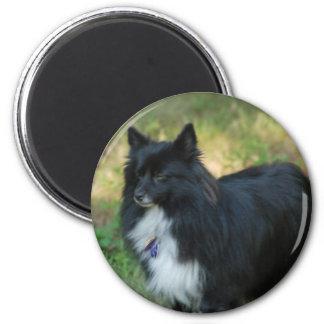 Imán del perro de Pomeranian