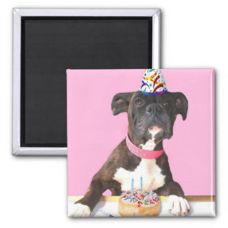 Imán del perro del boxeador del feliz cumpleaños