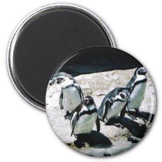 Imán del pingüino