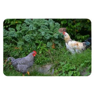 Imán del pollo