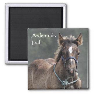 Imán del potro del caballo de proyecto de Ardenas