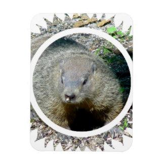 Imán del premio de Groundhog