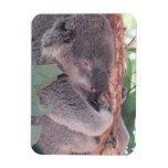 Imán del premio de la foto de la koala