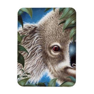 Imán del premio de la koala de los objetos curioso