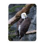 Imán del premio de la perca de Eagle